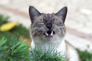 complainy cat